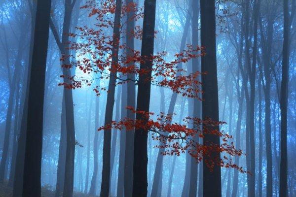 Ispo Textrends Die Textilen Farbtrends Fur Die Saison Herbst Winter