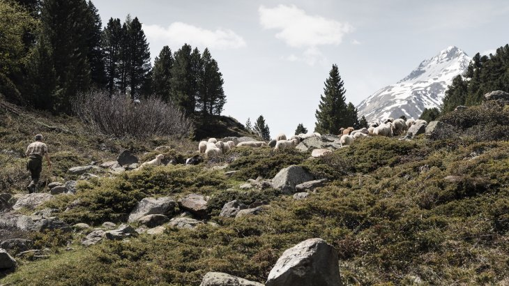 Paradise for people and animals: the mountains of South Tyrol.
