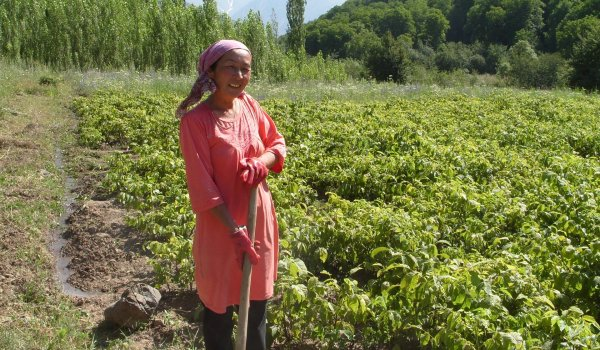 Conserving Central Asia's Ancient Fruit and Nut Forests