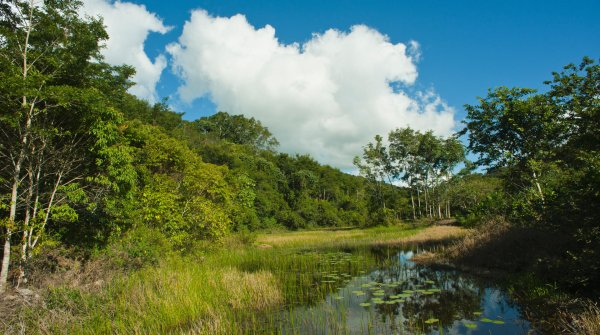 Conserving the Biodiversity of Brazil's Atlantic Forest