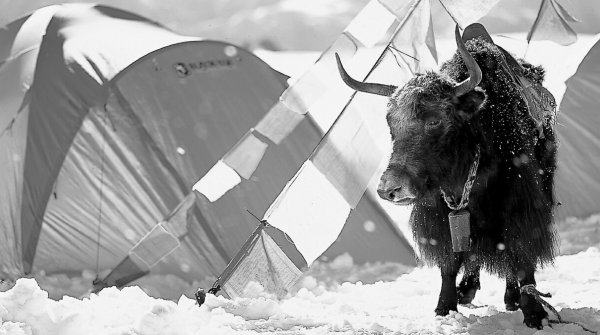 A 'crazy cow': the South Korean brand sees its roots as being right where the yaks live. Technical high-end gear is required to survive in the harsh environment of the Himalayas.