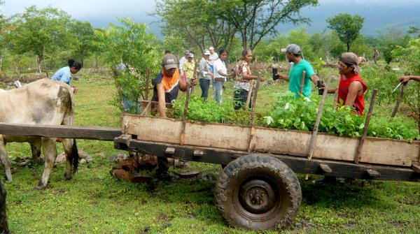 In the future, Odlo sportswear will also finance tree seedlings for new forests in Nicaragua
